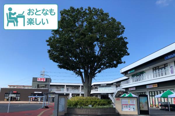 『あの木』に名前を付けよう~ネーミングワークショップ~