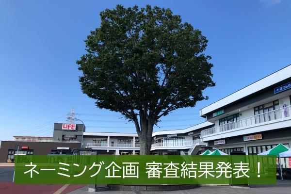『あの木』に名前を付けよう~ネーミング企画~審査結果発表!